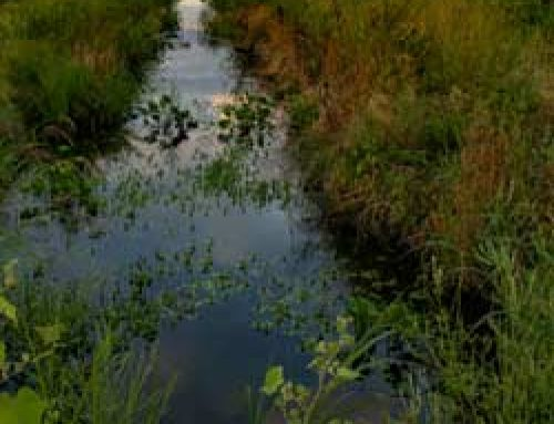 Great Kneighton: A Case Study in Sustainable Drainage