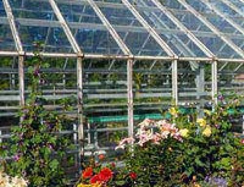 Green Energy in the Greenhouse