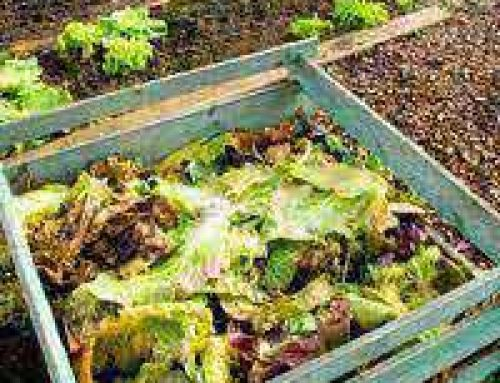 Community Composting Projects