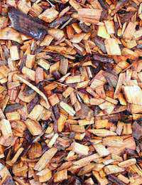 Interesting Information About Biomass Fuels