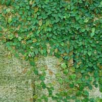 Can 'Living Walls' Help Buildings Become Carbon Neutral?