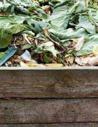 Composting: What You Might Not Know