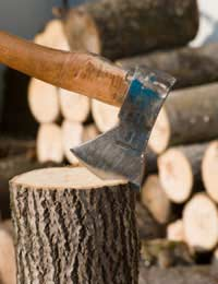Coppiced Wood as an Energy Source